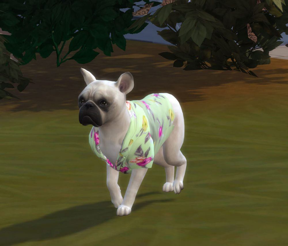 Hawaiian Shirt for Dogs